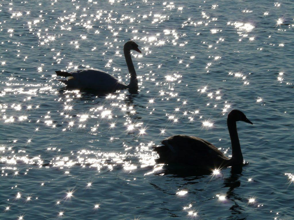 birds river andrea bond
