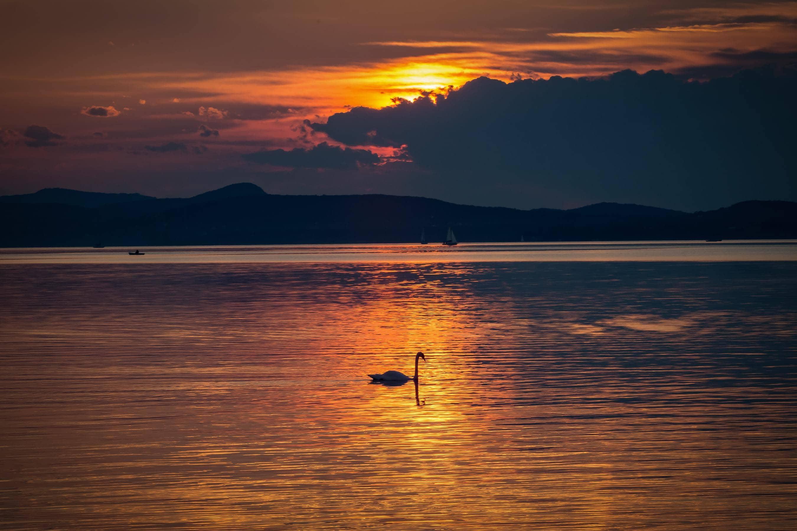 lake swan andrea bond